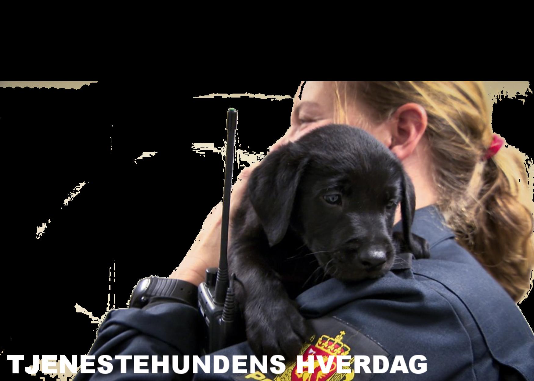 tjenestehund